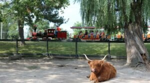 The Saginaw Children's Zoo In Michigan Is Home To A Mini Train Ride, A Carousel, And Animals Galore