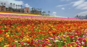 The Photos Of The 2021 Blooms At This Beautiful 50-Acre Flower Farm In Southern California Are Beyond Magical