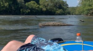 Take The Longest Float Trip In North Carolina This Summer On The French Broad River