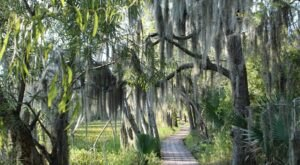 The Gorgeous 2-Mile Hike Near New Orleans In The Swamps That Will Lead You Past A Marsh Overlook