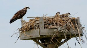 Spring Is The Best Time To See Eagles And Ospreys In Delaware's Wilderness Areas