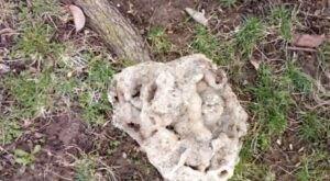 You'll Love Digging For Quartz At The Unique Haunted Ridge Rocks In Missouri