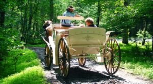 Take A Carriage Ride Through The Mountains For A Truly Unique Tennessee Experience