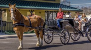 Take A Carriage Ride Through Rugged Central Oregon For A Truly Unique Experience