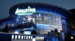Both A Restaurant And Aquarium, Colorado's Downtown Aquarium Is An Underrated Day Trip Destination