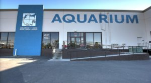 Get An Up-Close View Of Sharks, Rays, And Reptiles At Aquarium Of Boise In Idaho