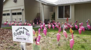 This Quirky Business Lets You Can Send Flamingos Instead Of Flowers, And It Couldn't Be More Oregon