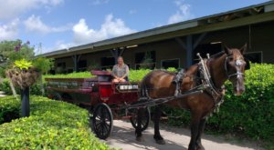 Take A Carriage Ride Through Horse Country For A Truly Unique Florida Experience