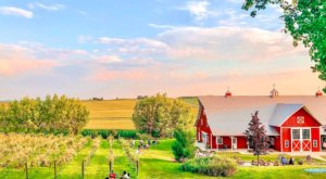 Pizza Night Will Never Be The Same Again After A Trip To Red Barn Farm In Minnesota
