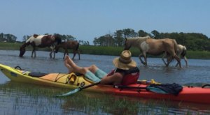 Paddle With Wild Island Ponies On This Unforgettable Kayak Tour In Virginia