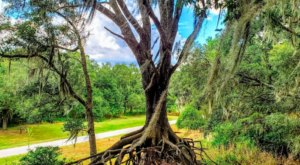 You Won't Believe Your Eyes When You See These Trees From Edward Medard Conservation Park In Florida