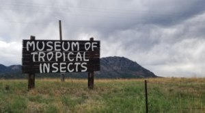 May's Bug Museum Is Hands-Down Colorado's Weirdest Road SideAttraction