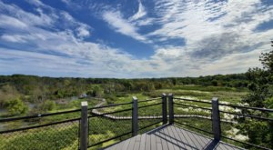Tiptoe Through The Treetops When You Visit The Galien River County Park Canopy Walkway In Michigan