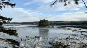 One Of The Only Places To Spot Horseshoe Crabs In Maine Is Along This 1-Mile Loop Hike On The Bagaduce River