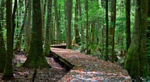 This Short And Sweet Boardwalk Trail In Alabama Will Take You Through Lots Of Beautiful Scenery
