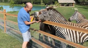 Spend The Night In An Airbnb That's On An Actual Exotic Animal Ranch Right Here In Texas