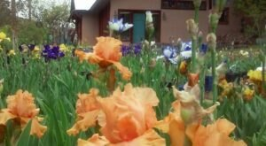 You Can't Pass Up A Trip To The Colorful And Photo-Worthy Hondo Iris Farm In New Mexico
