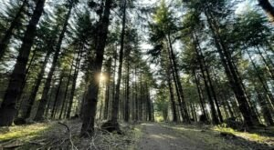 This Easy Hike In Corvallis, Oregon Winds Straight Through A Beautiful Arboretum