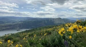 Breathtaking Views And Abundant Wildflowers Await You On The Coyote Wall Loop Trail In Washington
