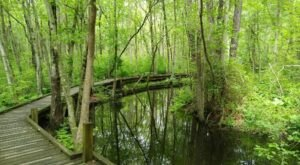 Abbotts Pond Is The Best Trail You've Never Heard Of In Delaware