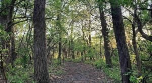 Cross A Rope Bridge, Visit A Historic School, And Walk Among 40 Varieties Of Plants On This Trail In Kansas