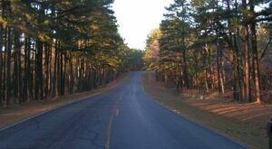 Explore The Fantastical Forest At Sequoyah State Park In Oklahoma