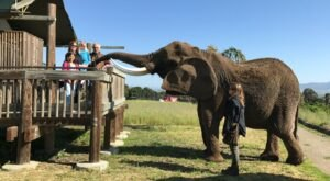 There's A Bed and Breakfast On This Elephant Ranch In Northern California And You Simply Have To Visit