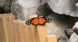 Spend A Magical Afternoon At York's Wild Kingdom, Home Of Maine's Largest Butterfly House