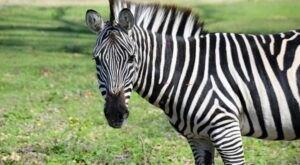 The Drive-Thru Gone Wild Safari In Louisiana Lets You Experience A Safari From You Own Car