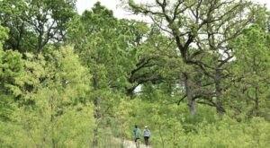 This Easy Loop Trail Winds Through One Of Iowa's Rare, Magnificent Oak Savannas