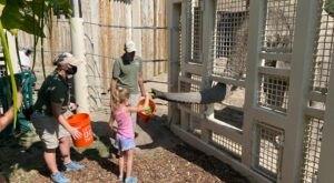 Walk On The Wild Side When You Feed An Elephant And Rhino At Utah's Hogle Zoo