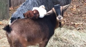 Visit The Most Adorable Rescued Farm Animals At 3 Palms Zoo In Delaware