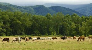 Hop In Your Car And Take The Cades Cove Loop For An Incredible 11-Mile Scenic Drive In Tennessee