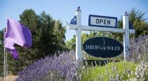 Get Lost In 10 Acres Of Beautiful Lavender Plants At Jardin du Soleil Lavender In Washington