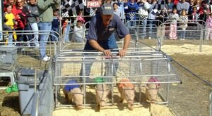 The Upcoming York State Fair Celebrates The Very Essence Of Pennsylvania, So Save The Date
