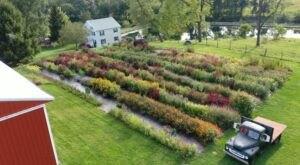 Visit Country Joy Flowers, A U-Pick Flower Farm In Pennsylvania