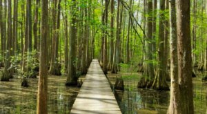 The Trail At Chicot State Park Will Lead You On An Enchanting Journey Through The Wetlands Of Louisiana