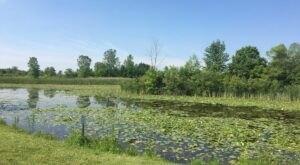Wetland Garden Trail Near Detroit Leads To A Magnificent Hidden Oasis