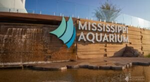 The Mississippi Aquarium Was Recently Named One Of The Nation's Best Attractions