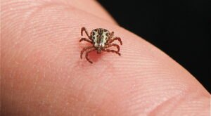 You Won't Be Happy To Hear That Iowa Is Experiencing A Major Surge Of Ticks This Year