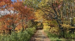 Mount Greylock State Reservation Is The Single Best State Park In Massachusetts And It's Just Waiting To Be Explored