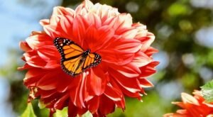 Take A Walk Through This Magical Butterfly Garden In SoCal And Observe Tropical Butterflies In Their Natural Habitat