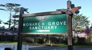 Monarch Grove Butterfly Sanctuary Is Home To Southern California's Largest Butterfly House