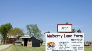 Have An Udderly Good Time Milking The Friendly Cows At Wisconsin's Mulberry Lane