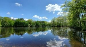 Rose Lake State Wildlife Research Area Is A Scenic Outdoor Spot In Michigan That's A Nature Lover's Dream Come True