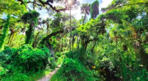 Florida's Bear Creek Nature Trail Leads To A Magnificent Hidden Oasis