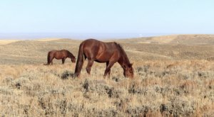 Hop In Your Car And Take The Pilot Butte Wild Horse Loop For An Incredible 24-Mile Scenic Drive In Wyoming