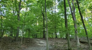7 Easy Hikes Around Detroit You'll Want To Knock Off Your Summer Bucket List