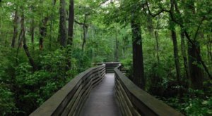 First Landing Is The Single Best State Park In Virginia And It's Just Waiting To Be Explored