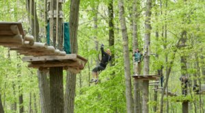 Soar Above The Trees On An Aerial Surfboard At This New Jersey Adventure Course